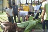 Masjid Darul Abrar DPRD Riau sembelih 20 sapi