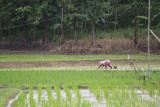 Pupuk subsidi di Lampung telah disalurkan 304.877 ton