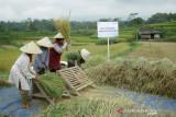 BRI dukung pengembangan ekosistem padi  perkuat ketahanan pangan