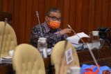 Anggota DPR menyatakan perlu segera benahi tata kelola komoditas cabai