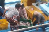 Produksi ikan tangkapan nelayan Sungailiat Babel capai 283 ton per Agustus 2021