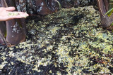 DPRD Luwu Timur soroti dugaan pencemaran Pulau Mori oleh PT Vale