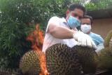 Medan tawarkan durian bakar bagi  penikmat durian