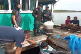 Gakkum KLHK Sulawesi gagalkan penyelundupan kayu meranti ke wilayah Sulsel