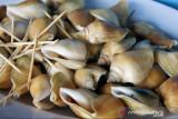 Rektor Umrah: Jangan konsumsi bagian pencernaan siput gonggong