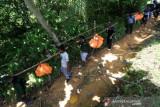 Evakuasi 3 Ekor Bangkai Harimau Ke Kantor TNGL