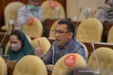 Legislator pertanyakan pembabatan hutan lindung di Manggarai Barat