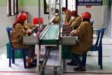 China lirik salak nglumut organik lereng Merapi