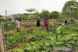 Lahan untuk area pertanian di Baubau mulai sulit ditemui