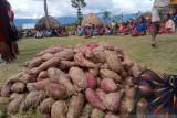 Wabup:Warga Jayawijaya lebih bergantung ke beras dibanding umbi-umbian