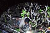 BKKPN siap bangun demplot penangkaran penyu permanen di Mabar