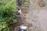 Program penanaman mangrove yang dikembangkan BRGM dinilai bermanfaat untuk petambak