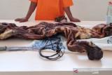 KLHK gagalkan penjualan janin rusa dan kulit harimau di Riau