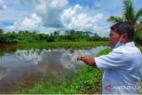 Kawasan Tanjung Buyu Memiliki Potensi Untuk Pertanian