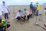 Pantai Maligi Sasak Pasbar ditanami 8.400 batang mangrove, ini tujuannya kata Gubernur Sumbar