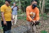 BBKSDA apresiasi dokter lestarikan burung kuau Sumatera