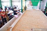Sulsel uji coba pabrik benih jagung untuk penuhi target swasembada