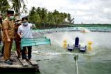 'Shrimp Estate' Kalteng diharapkan berkontribusi rebut pasar internasional