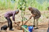DIY kembangkan hutan agroforestry di Desa Sriharjo Bantul