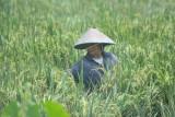 Nilai Tukar Petani Sumatera Selatan  Agustus 2021 naik 3 persen