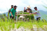Pemkot Kendari segera distribusikan pupuk bersubsidi kepada 1.832 petani