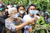 Sumatera Selatan tingkatkan  kualitas kopi melalui gerakan stek batang