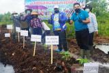 Tanam perdana porang tandai peresmian Kebun Pemuda KNPI Kotim