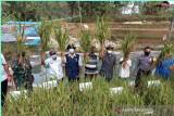 Pemkab Gunung Kidul mengoptimalkan lahan kering naikkan produksi pertanian
