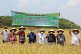 Bupati Lamsel dan Ketua Komisi IV DPR RI panen raya di Kecamatan Sidomulyo
