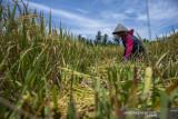 Kontribusi Sektor Pertanian pada Pertumbuhan Ekonomi