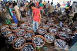 Potensi Perikanan Aceh