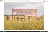 Bupati Mesuji panen raya padi musim gadu di Tanjung Mas Rejo