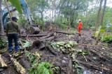 BPBD NTT: 26 warga terdampak dan 5 rumah rusak akibat banjir Ngada