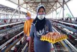 Antisipasi gejolak pasar, peternak di Boyolali didorong jalin pola kemitraan