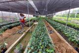 Agar hasil panen berkualitas dan produksi meningkat, BBI Sumbar ajak petani gunakan ini