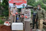 Upaya penyelundupan 100 kg daging rusa digagalkan Balai Karantina Kendari