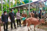 Pemkab Buol  beri bantuan 199 sapi kepada 24 kelompok peternak