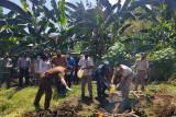 Karantina Pertanian Ende musnahkan media pembawa HPHK