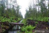 Menjaga karbon lewat pengelolaan HLG  Sungai Buluh