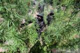 Polisi tangkap dua remaja diduga terlibat peredaran narkoba di Pesisir Selatan