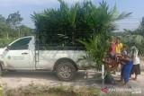 Petani Riau borong 708.277 bibit sawit unggulan PTPN V