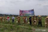 Kulon Progo perbarui data lahan baku sawah