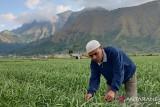 BI: sektor pertanian akan menahan perlambatan pertumbuhan ekonomi NTB