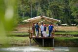 Pemprov Riau gencar promosikan Desa Wisata Kampung Kolam Ikan Patin Koto Masjid yang kian mempesona