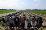 Petani milenial sukses angkat potensi bawang merah di Boyolali