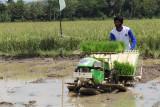 KTNA Lampung: Peningkatan produksi padi harus diimbangi kesejahteraan petani