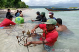 Menjaga surga bawah laut Kapontori dan ancaman nyawa bagi nelayan