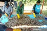 KKP menggelar pelatihan pembudidaya untuk komoditas udang vaname di Aceh