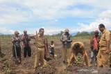 Pemkab Jayawijaya harapkan Stiper Wamena siapkan petani moderen