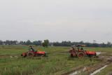 Pengamat sebut padi hibrida mampu tingkatkan produksi padi Lampung